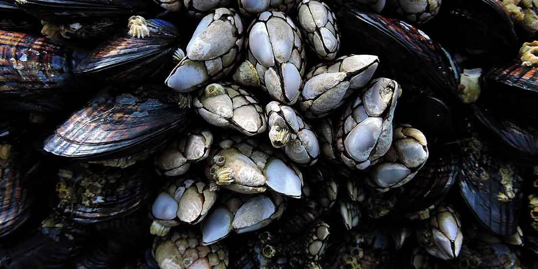 Galicia - galangal - food - spain - travel
