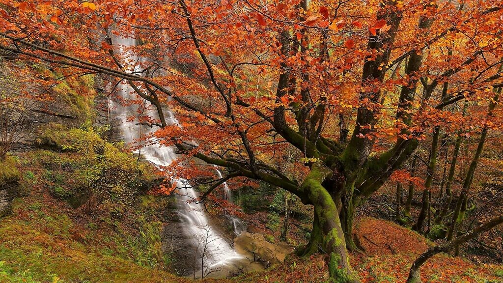 Autumn leaves, trees and a waterfall in the Gorbea Natural Park in Spain in the Basque country, fall, autumn