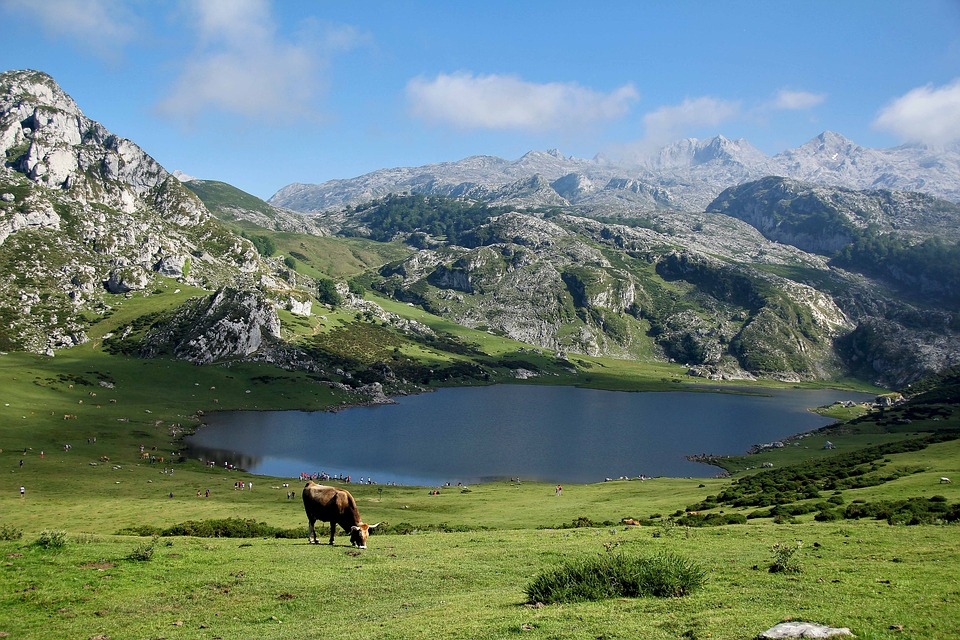 Picos de Europa mountains in Spain in Asturias in fall, a lake, a cow, and grass